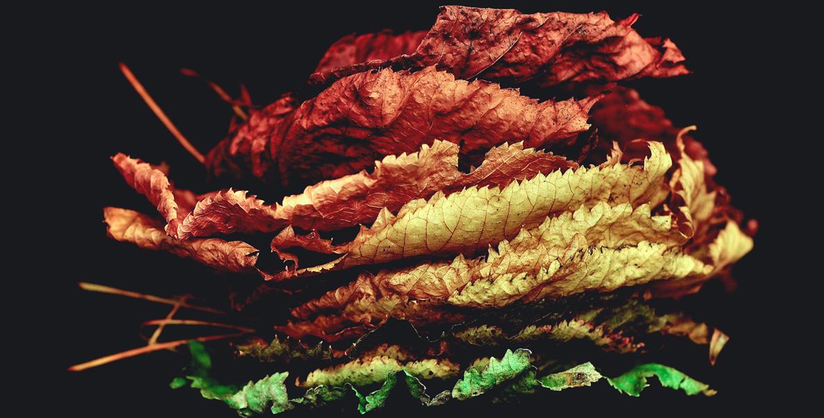 leaf_1new